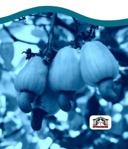 plantio cor azul
